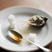 Tea Bag and Sugar Cubes