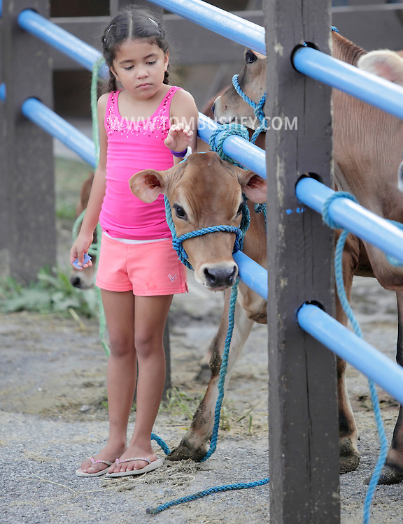 Augusta, New Jersey - A young girls pets a cow at the New Jersey State Fair and Sussex County Farm and Horse Show on Aug. 11, 2010.