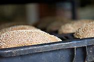 Toinen Samsaran klasiikko, siemenleipä vuokassa.