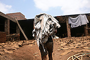 A labourer is moving a heavy load of half-processed leather destined to reach a new unit to complete another step of the production chain in Kanpu, Uttar Pradesh. In Jajmau Industrial Area the leather passes hand in hand many times before being ready for manufacturing stage. This 'outsourcing effect' creates a considerable risk for local underprivileged children to become involved in hazardous activities and subjected to exploitation.