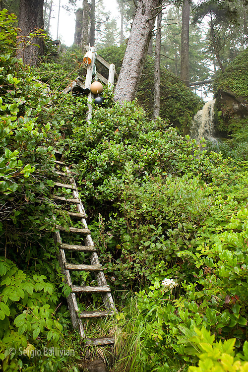 West Coast Trail - Day 5.  A ladder provdes access out of the coast into the forest trail.