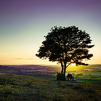 Small yellow wild flowers on the south downs in West Sussex, England at sunset in summertime with sun behind a small silhouetted tree.
