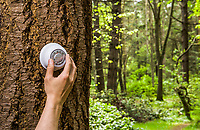A human hand adjusting a thermostat on a tree in a forest. Global Warming concept. Turn down the heat.
