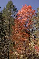 Towers of color - Oak Creek Canyon, AZ