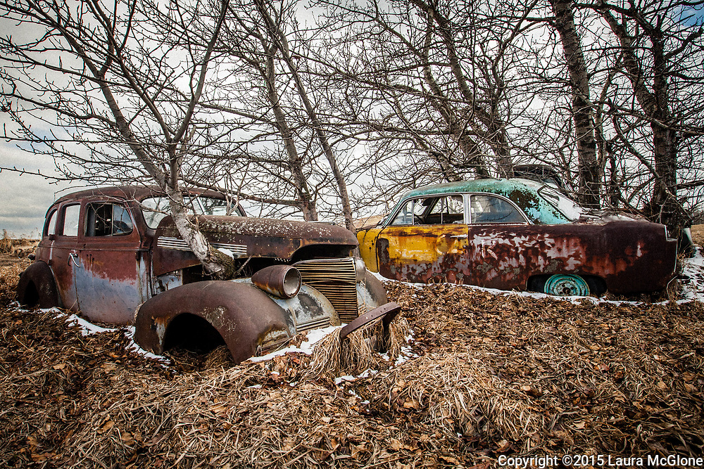 1940s Cars with Tree Growing out of hood, Alberta Canada