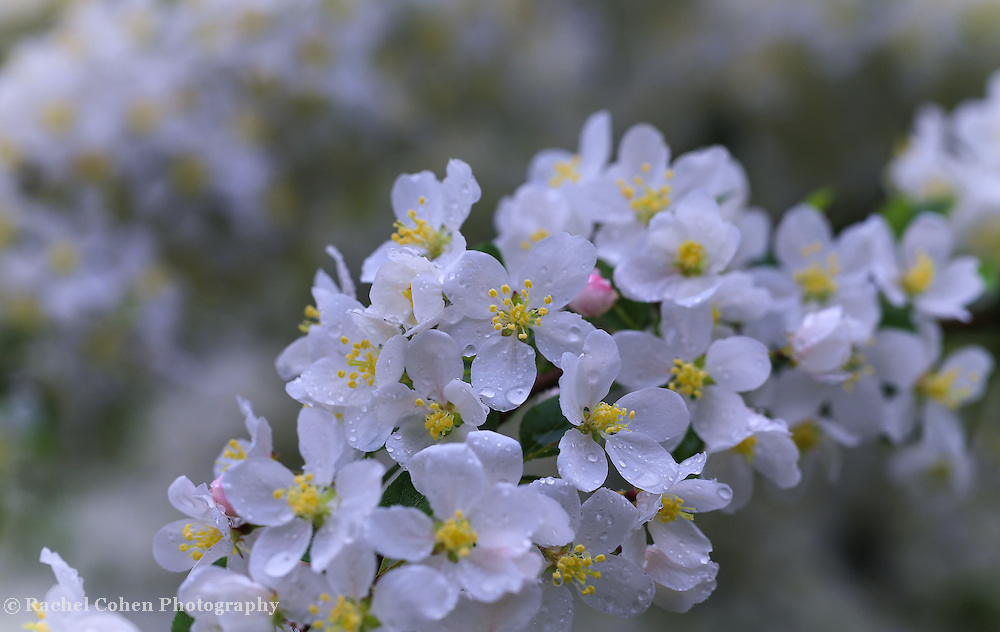 &quot;Fresh as Morning Air&quot;<br />