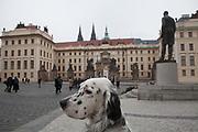 """English Setter """"Rudy"""" am 22.11. 2018 auf einem Spaziergang in der Nähe der Prager Burg. Rudy wurde Anfang Januar 2017 geboren."""