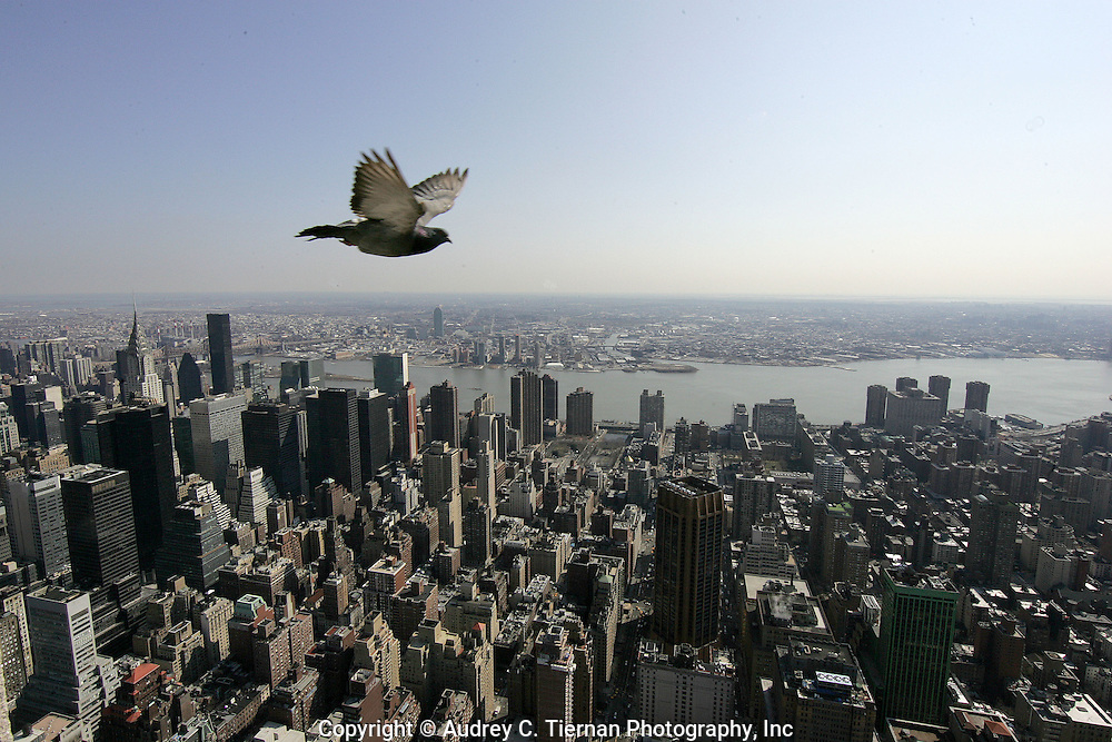 New York, NY-- March 10, 2008:  Views from the Empire State Building Observation Deck.  ©Audrey C. Tiernan Photography, Inc.