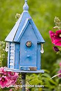 01324-01408 House Wren (Troglodytes aedon) at blue nest box near Hollyhocks (Alcea rosea) Marion Co. ,  IL