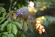 Garden City Park, New York, U.S. - July 5, 2014 - Plants growing in backyard, during July 4th holiday weekend.