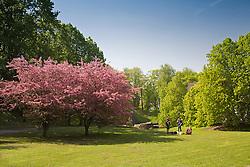 Park in Tartu, Estonia, Europe