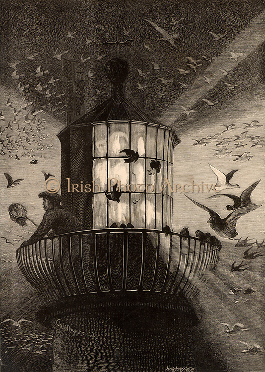 The lantern of the Eddystone lighthouse built on the Stone 13 miles South-east of Polperro, Cornwall, England, being used to observe migrating birds.  This practice began in the Autumn of 1878.  Illustration by Charles Whymper (1853-1941) from 'The Quiver' (London, 1882).