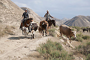 Horseback cattle herding in the Ak Tal valley, Kyrgyzstan
