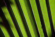 Abstract detail of a tropical leaf in Hampi, India.