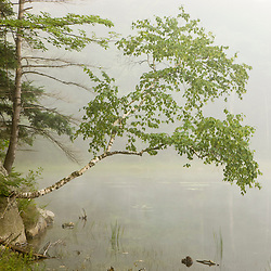 A foggy morning on Gilson Pond in New Hampshire's Monadnock State Park.
