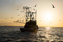 Silhouette of man on shrimp trawling boat surrounded by birds in Galveston Bay on the Texas Gulf Coast at sunrise.