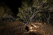 Ruhendes L&ouml;wenrudel (Panthera leo) und Touristen in der Nacht im Schutzgebiet Sabi Sands, S&uuml;dafrika<br /> <br /> Resting lion pride (Panthera leo) and tourists in the private game reserve Sabi Sands at night, South Africa