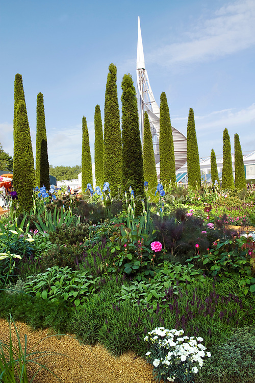 Tall Thuja plicata evegreen trees amongst perennial planting including Pinus mugo, Foeniculum vulgare 'Purpureum', Salvia officinalis, Roses, Iris & Lavandula stoechas subsp. stoechas. Architectural tower is a perfumery for harvesting rainwater & producing solar power. The Perfume Garden. Design by Laurie Chetwood & Patrick Collins. Sponsor Gazeley, P&G Prestige Products & Chetwood Architects. RHS Chelsea Flower Show 2009