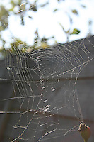 Spiders web<br />