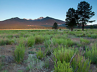 San Francisco Peaks View from Bonito Meadow, Sunset Crater Volcano National Monument, Arizona