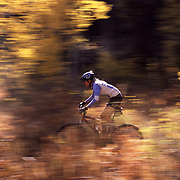 A photo of a woman mountain biking in fall aspens in Truckee, CA. This picture was panned at a slow shutter speed to give the impression of speed.