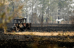 NEW SOUTH WALES, Nov. 11, 2019  A white horse trots on the field where a farmhouse was burnt by bushfires near Port Macquarie, New South Wales, Australia, Nov. 11, 2019..   A devastating start to the Australian bushfire season has prompted a state of emergency in the eastern state of New South Wales (NSW), with the country's largest city, Sydney bracing for ''catastrophic'' fire danger. .   On Monday, a state of emergency was declared for NSW, with exceptionally hot and windy conditions predicted for Tuesday, threatening to create an even bigger fire disaster than that which left three people dead last week. (Credit Image: © Bai Xuefei/Xinhua via ZUMA Wire)