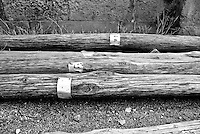 Vecchi pali in legno numerati oramai in disuso abbandonati lungo il muro di recinzione della stazione. Reportage che racconta le situazioni che si incontrano durante un viaggio lungo le linee ferroviarie SUD EST nel Salento.