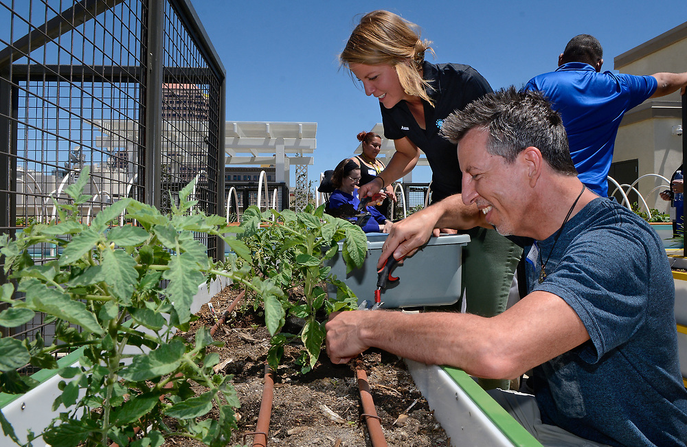 jt061317d/a sec/jim thompson/ left  to right Anna Martin, Health Living Service Coordinator for YES Housing Developing Communities  and resident Rodney Guyette put some compost around some tomato plants in one of the gardens on the roof top of the Imperial Building in downtown Albuquerque. Tuesday June. 13, 2017. (Jim Thompson/Albuquerque Journal)