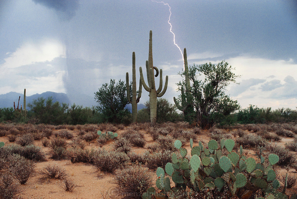 Weather: A Saguaro Cactus and an afternoon summer lightning storm in the Tucson, Arizona desert. (1993)