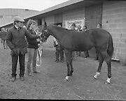Shergar Foal Sale. 1983.<br />
