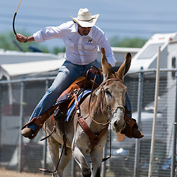 2009 Bishop Mule Days...Photo by David Calvert