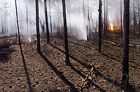 Frame grab from the tree time-lapse camera at a prescribed burn in a Longleaf Pine, Pinus palustris forest in Moody Forest Natural Area managed by The Nature Conservancy near Baxley, Georgia on March 27, 2013.