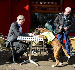 Pictured: Willie Rennie and Harvey the Boxer dog stopped for refreshments at Victor Hugo while Harvey's owner Derek Muir looked for a seat.<br /> <br /> The Scottish Liberal Democrat leader Willie Rennie highlighted analysis revealing the number of working days lost across Scotland due to depression as he met therapy animals from Canine Concern Scotland, a charity which supports people with mental health issues and other conditions. <br /> <br /> Ger Harley | EEm 31 March 2016