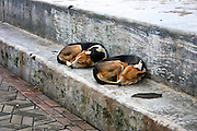 dogs sleeping on the promenade, morning time, India Trip 2005, Mumbai India