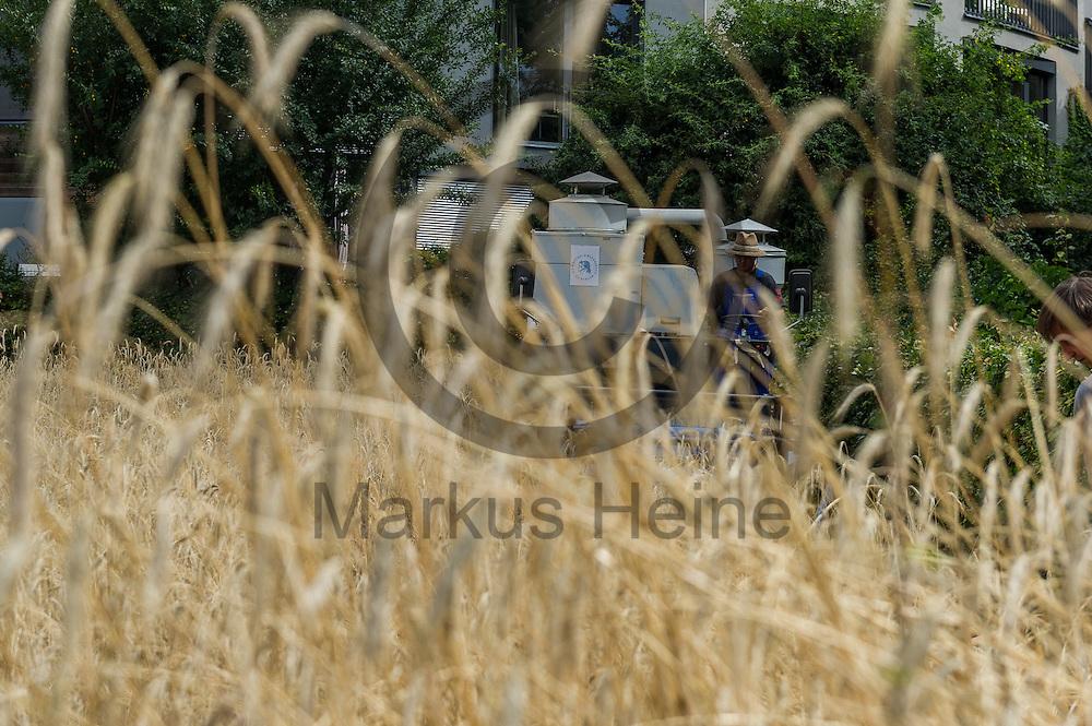 Ein Mitarbeiter der lebenswissenschaftliche Fakultaet der Berliner Humboldt-Universitaet maeht waehrend der Roggenernte an der Kapelle der Versoehnung am 28.07.2016 in Berlin, Deutschland mit einem Maehdrescher das Roggenfeld. Seit elf Jahren wird das Getreide auf rund einen halben Hektar gro&szlig;e Getreidefeld im ehemaligen Todesstreifen gesaet und geerntet sowie nachhaltig verarbeitet.<br /> Foto: Markus Heine / heineimaging<br /> <br /> ------------------------------<br /> <br /> Veroeffentlichung nur mit Fotografennennung, sowie gegen Honorar und Belegexemplar.<br /> <br /> Bankverbindung:<br /> IBAN: DE65660908000004437497<br /> BIC CODE: GENODE61BBB<br /> Badische Beamten Bank Karlsruhe<br /> <br /> USt-IdNr: DE291853306<br /> <br /> Please note:<br /> All rights reserved! Don't publish without copyright!<br /> <br /> Stand: 07.2016<br /> <br /> ------------------------------