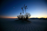 A yucca plant is silhouetted by the setting sun at White Sands National Monument on October 27, 2006 in New Mexico.