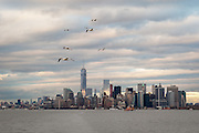 """Seagull Skyline""<br />