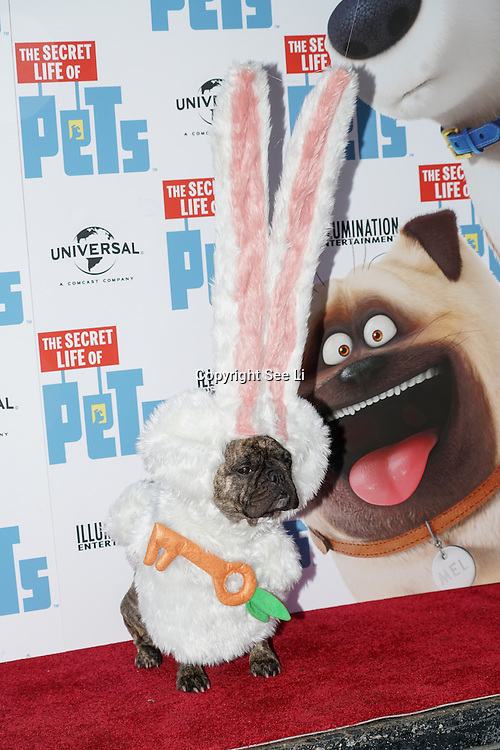 London, England,UK. 12th Nov 2016: Maddie Lewington and Dolly Rocks the dog attend the UK 'Petmiere' of The Secret Life of Pets to mark the Blu-ray and DVD release on Monday November 14th 2016 at Prince Charles Cinema, Soho,London,UK. Photo by See Li