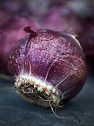 Hyacinth bulbs  (Blue Pearl)