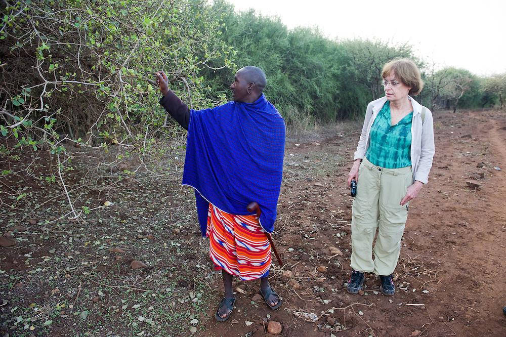 Maasai guide explaining medicinal plants