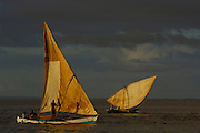Piroques or outrigger canoes going out to sea from the Bombetoka delta for the day to fish. Mahajunga. Western MADAGASCAR 2005