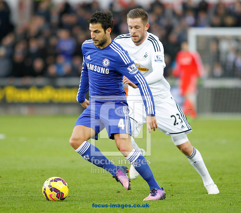 Gylfi Sigurdsson of Swansea City and Cesc Fabregas of Chelsea during the Barclays Premier League match at the Liberty Stadium, Swansea<br /> Picture by Mike Griffiths/Focus Images Ltd +44 7766 223933<br /> 17/01/2015