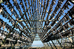 NORWAY LOFOTEN 27MAR07 - Stockfish (stokfisk) racks with cod hung out to dry outside Henningsvaer on the Lofoten islands...jre/Photo by Jiri Rezac..© Jiri Rezac 2007..Contact: +44 (0) 7050 110 417.Mobile: +44 (0) 7801 337 683.Office: +44 (0) 20 8968 9635..Email: jiri@jirirezac.com.Web: www.jirirezac.com..© All images Jiri Rezac 2007 - All rights reserved.
