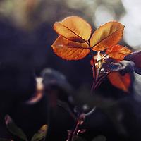 close up shot of golden translucent leaves
