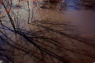 With the Spoon River out of its banks due to the massive amount of snow melting during a February thaw, a few trees are engulfed by the flood waters, their shadows cast by a full moon.