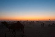 Nagaur Camel Fair, Rajasthan, India