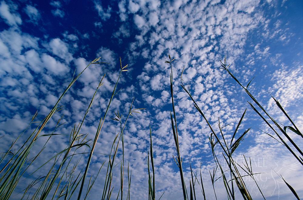 Big Bluestem and sky, Spring Creek Prairie, Nebraska.