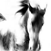 Running horse - Jelle