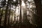 Sunlight burns through mist in the forest on Stuart Island, a remote isle part of the San Juan Islands.<br />