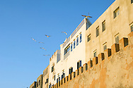 Essauoira medina walls and houses